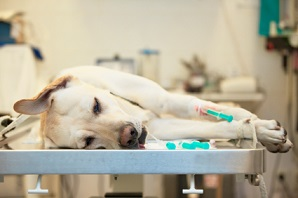 Image-is-my-dog-safe-under-anesthesia.jpg